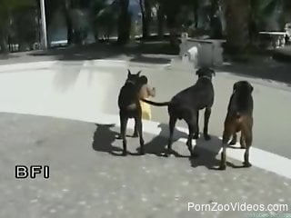 Latina chick is sexually attacked by several dogs in skate park