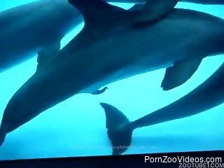 Horny dolphin slides his erect tool into hole of female